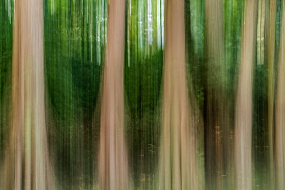 Trees In Abstract